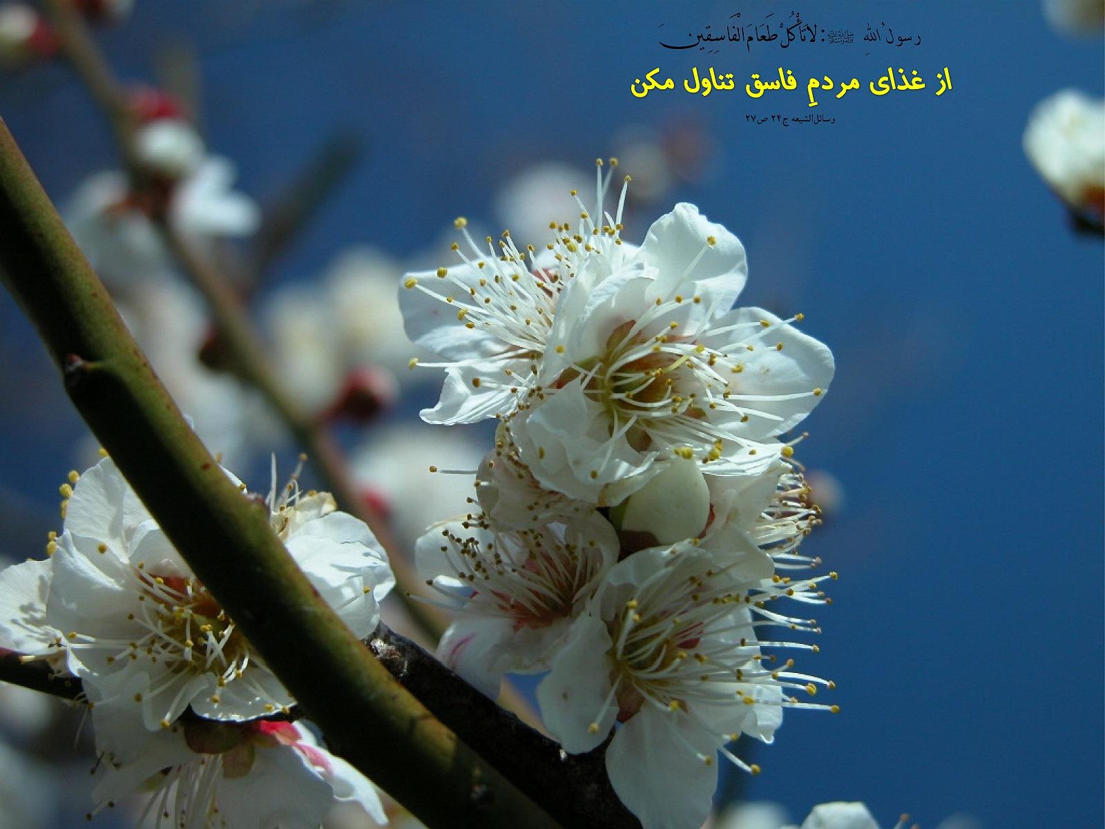 http://anti211.persiangig.com/hidith-tasviri/641Hadis%20H181.jpg