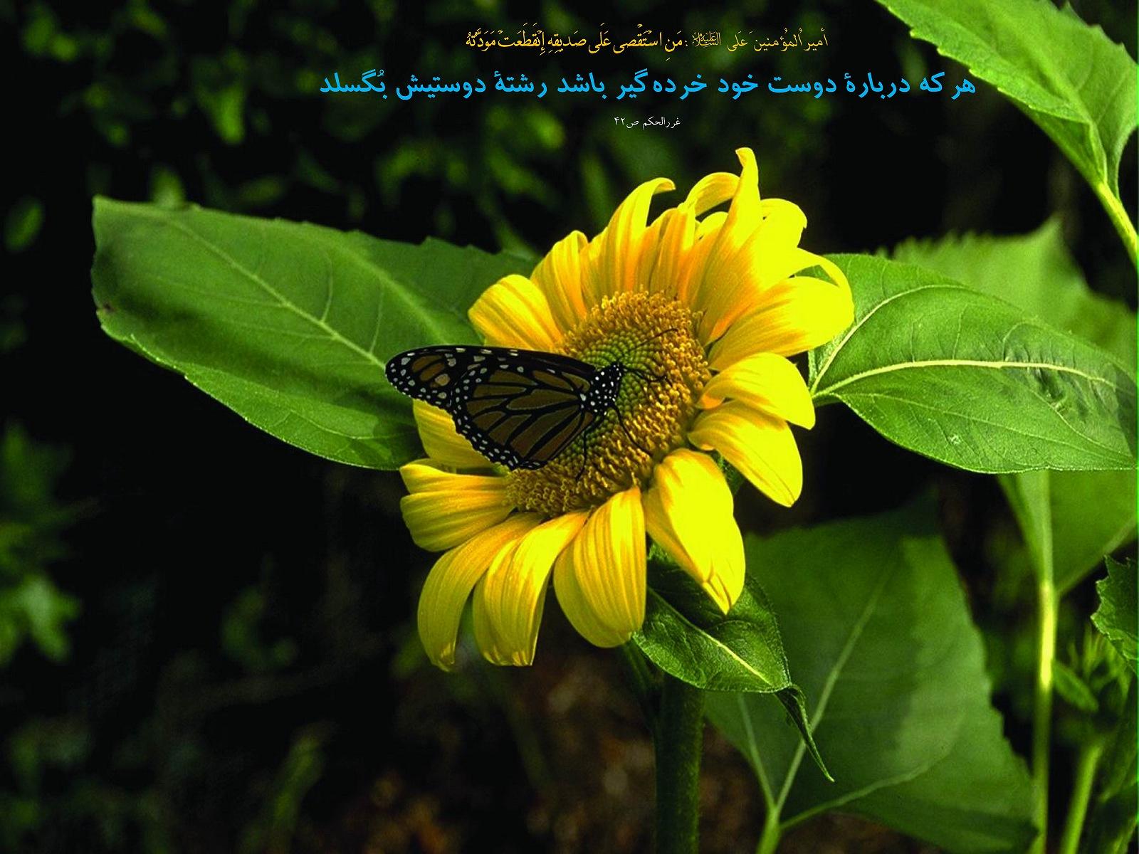 http://anti211.persiangig.com/hidith-tasviri/641Hadis%20H183.jpg