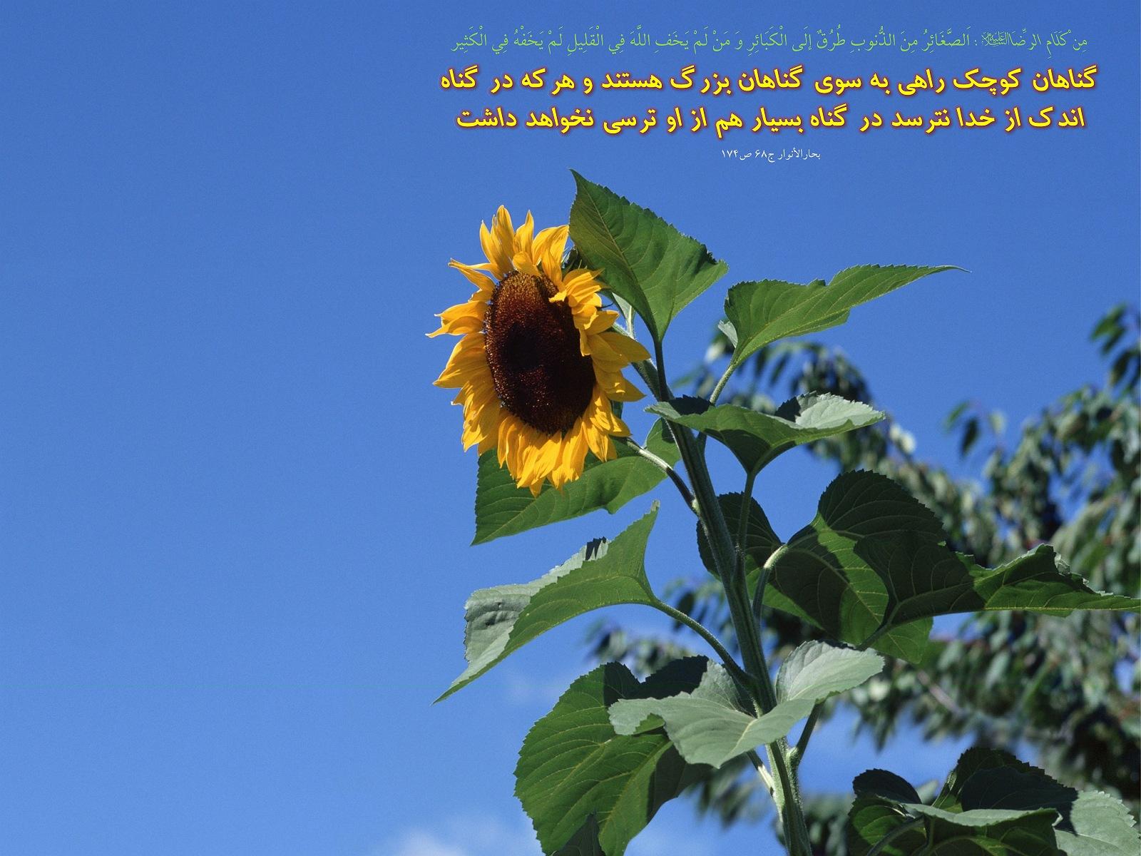 http://anti211.persiangig.com/hidith-tasviri/641Hadis%20H184.jpg